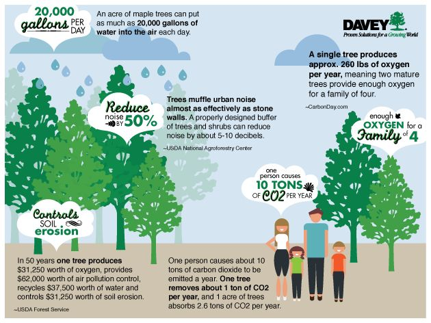 """how trees improve environment This is that trees are known to improve urban air quality by """"people have sort of neglected the psychological benefits of the environment,"""" said."""